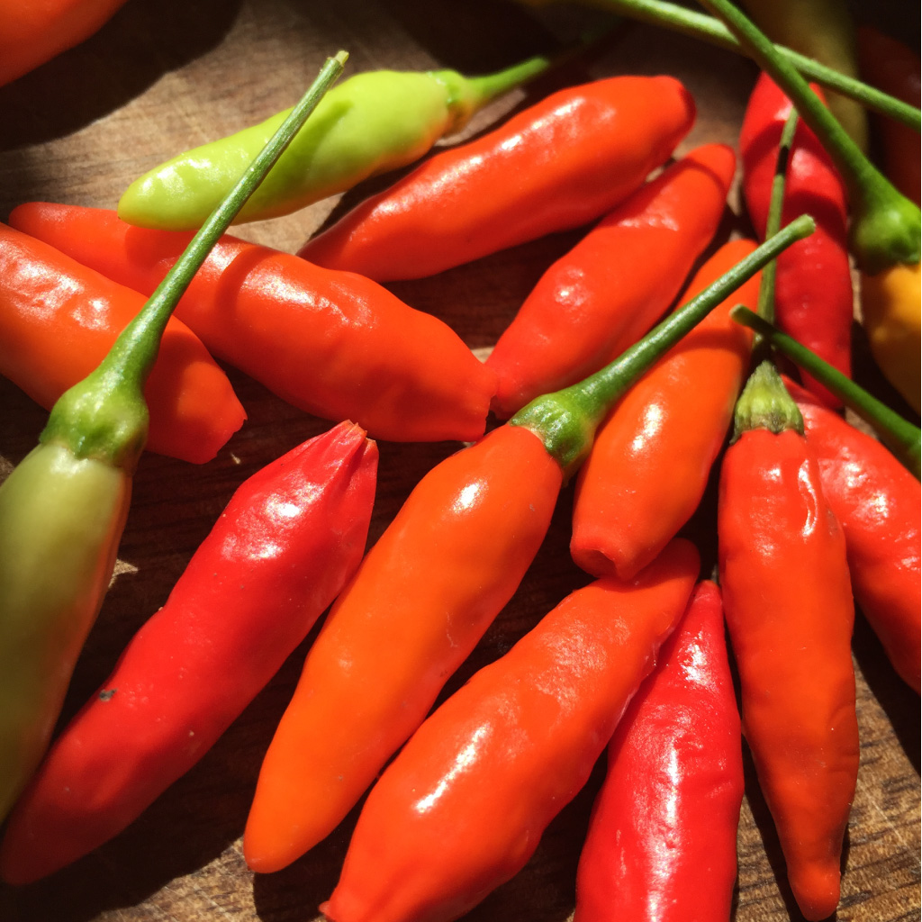 tabasco-peppers